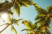 Coconut palm trees and shining sun over bright sunny sky — Stock Photo