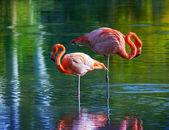 Two pink flamingos standing in the water. Stylized photo — Stock Photo