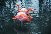 Two pink flamingos in water. Vintage stylized photo — Stock Photo