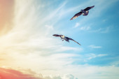 Seagulls flying oncolorful  cloudy sky background — Stock Photo