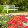 Colorful flowers on the flowerbed in summer park — Stock Photo #66899903