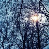 Strahlende Sonne mit Linseneffekt nackte Bäume Silhouette — Stockfoto