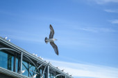 Seagull flying on sky background near the pier — Stock Photo