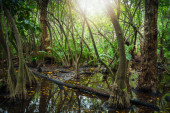 Tropical forest with mangrove trees and lens flare  — Stock Photo