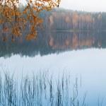 Autumn yellow birch leaves over still lake water — Stock Photo #72974323