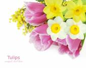 Mimosa,tulips and narcissus flowers isolated on white background with sample text — Stock Photo