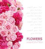 Background with peonies and roses isolated on white with sample text — Stock Photo