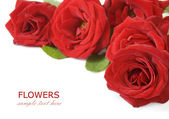 Red roses bouquet isolated on white background with sample text — Stock Photo