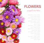 Summer flowers background isolated on white with sample text — Stock Photo