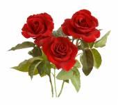 Bunch of velvet red roses isolated on white — Foto de Stock