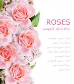Wedding background with pink roses and lilac flowers isolated on white with sample text — Stock Photo