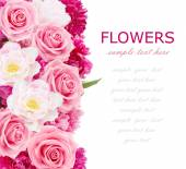 Flowers background with peonies, tulips and roses isolated on white with sample text — Stock Photo