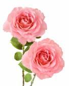 Wedding pink roses bouquet isolated on white background — Stock Photo