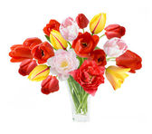 Tulips bunch isolated on white background — Stock Photo