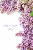 Lilac flowers background isolated on white with sample text — Stock Photo