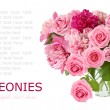 Huge bunch of peonies and pink roses in vase isolated on white with sample text — Stock Photo #63664835