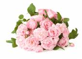 Pink roses bunch isolated on white background — Stock Photo