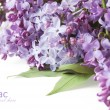 Lilac flowers background isolated on white with sample text — Stock Photo #64142941