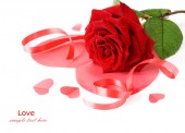 Red rose with leaves isolated on white — Stock Photo