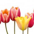 Tulips bunch with red and yellow flowers isolated on white background — Stock Photo #64307577