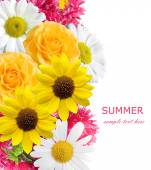 Aster, roses, sunflowers and chamomile flowers background isolated on white with sample text. Summer flowers — Stock Photo