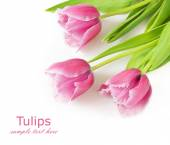 Tulips bunch isolated on white background with sample text — Stock Photo