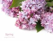 Huge bunch of different kind lilac isolated on white — Stock Photo