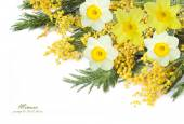Mimosa and narcissus flowers isolated on white background with sample text — Stock Photo