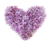 Flowers of a lilac in the form of a heart isolated on a white — Stock Photo