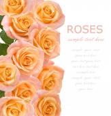 Tea and pink roses background with sample text — Stock Photo