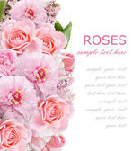 Peony, lilac and roses background isolated on white with sample text — Stock Photo