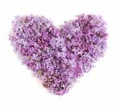Lilac flowers heart isolated on white background. Love concept — Stockfoto
