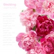 Peony flowers background isolated on white with sample text — Stock Photo #66059843
