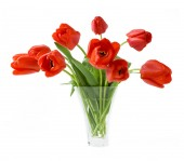 Bunch of red tulips isolated on white — Stock Photo