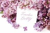 Lilac flowers background isolated on white with sample text — Foto Stock