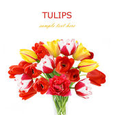 Tulips bunch isolated on white background — Stockfoto