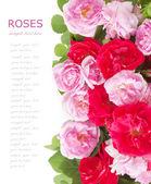 Bouquet de roses roses et rouges isolé sur fond blanc — Photo