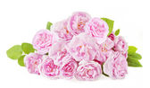 Rose flowers bunch isolated on white background — Stock Photo