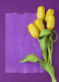 Yellow tulips bunch on violet background — Fotografia Stock