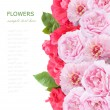 Flowers background isolated on white with sample text. Pink and red roses and peony — Stock Photo #68230137