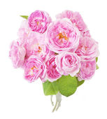 Bunch of pink roses isolated on white — Stock Photo
