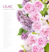 Flowers background isolated on white with sample text. Lilac and roses — Stock Photo