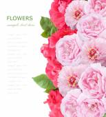 Flowers background isolated on white with sample text. Pink and red roses and peony — Stock Photo