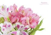 Flowers bunch isolated on white background with sample text — Foto de Stock