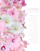 Flowers background isolated on white with sample text — Stock Photo