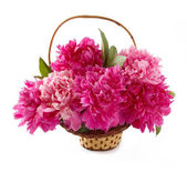 Basket of peonies isolated on white — Stock Photo