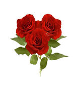 Red roses bunch isolated on white — Stock Photo