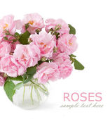 Pink rose bunch isolated on white background — Stock Photo