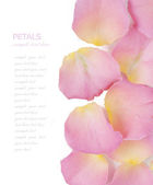 Rose petals isolated on white background — Stock Photo