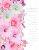 Flowers background with roses isolated on white with sample text — Stock Photo